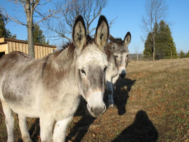donkeys2.jpg