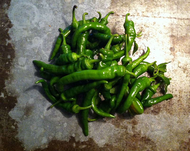 These hot peppers came out of our garden two days ago. Thankfully they were not hit by frost!