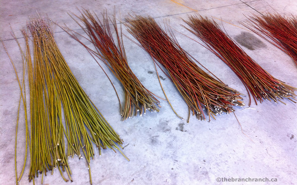 Willow graded by size and variety ready for bundling.