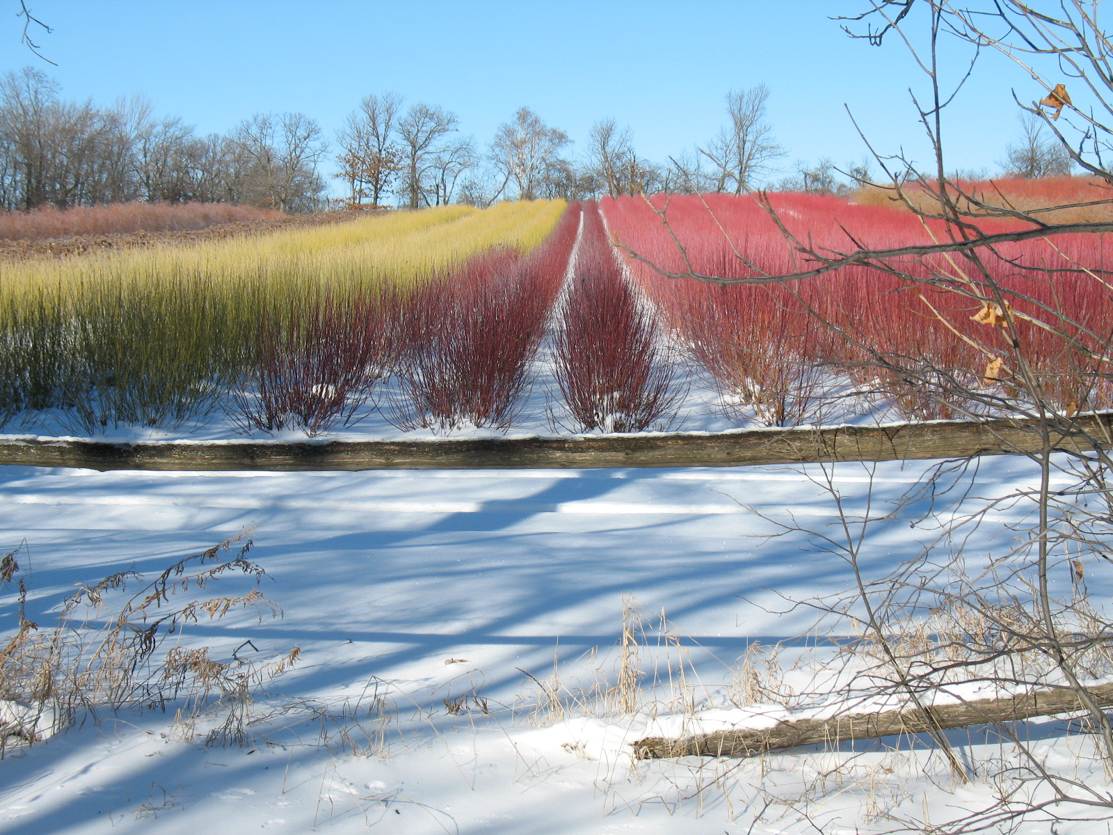 Rainbow fields of The Branch Ranch.