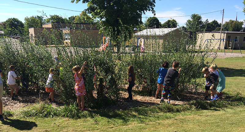 Students from  Percy Centennial Public School with their living willow playground after one season's growth.