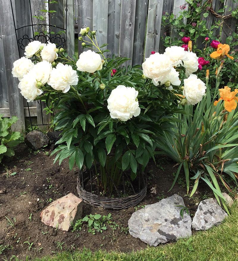plantcollar5.jpg