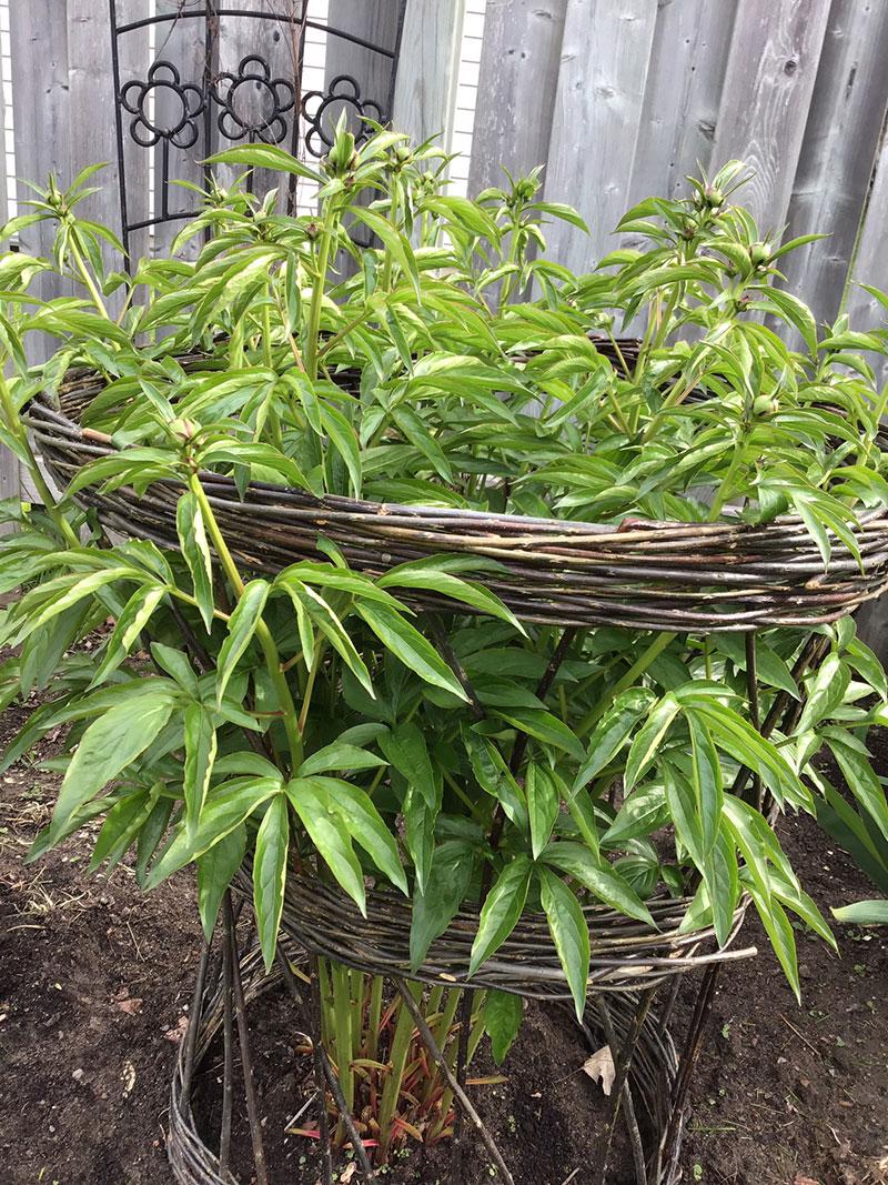 plantcollar3.jpg