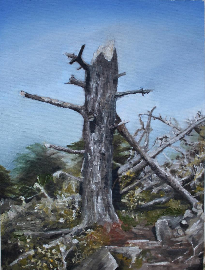 Tree I, Morro Bay