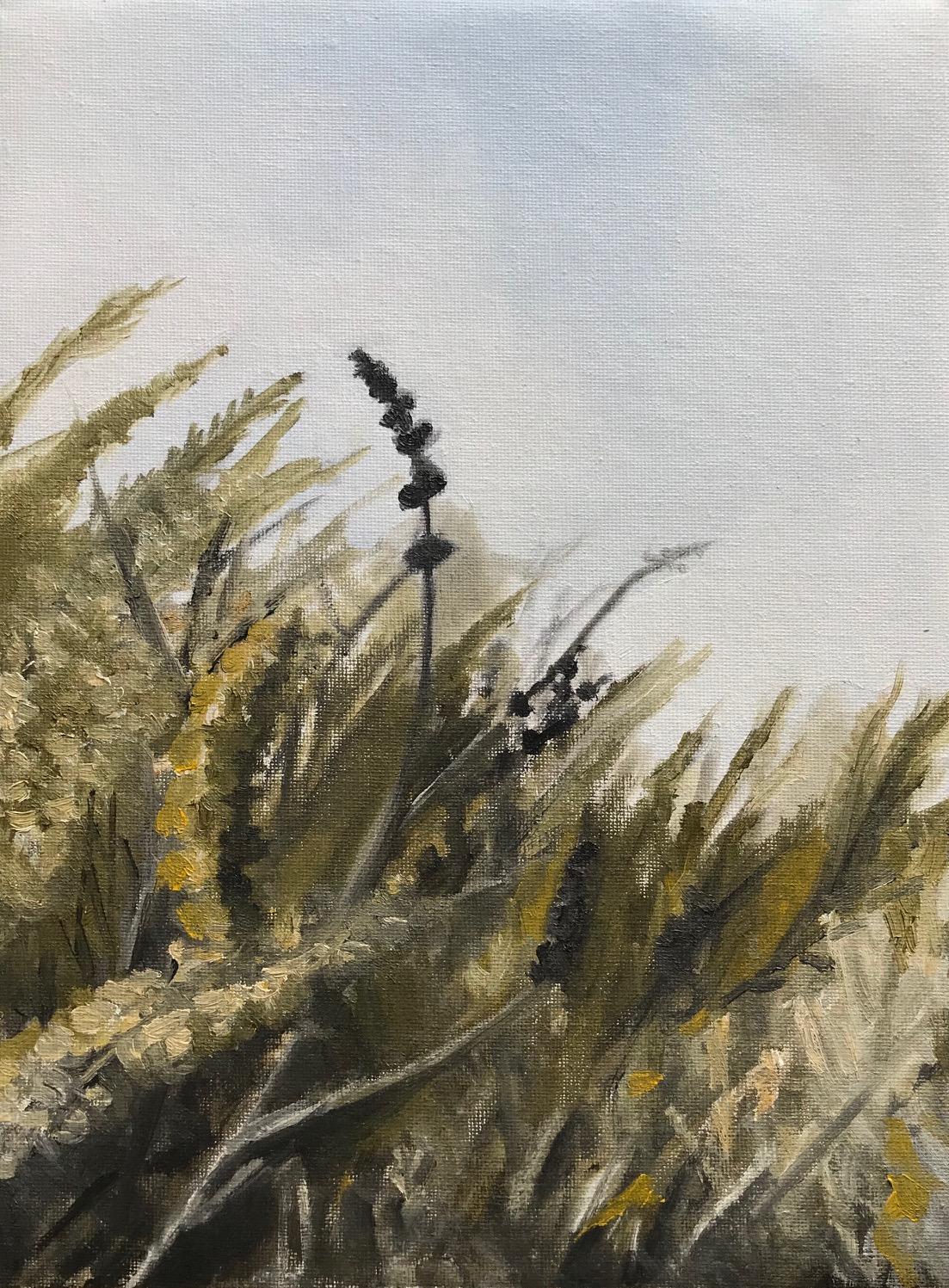 Brush, Morro Bay