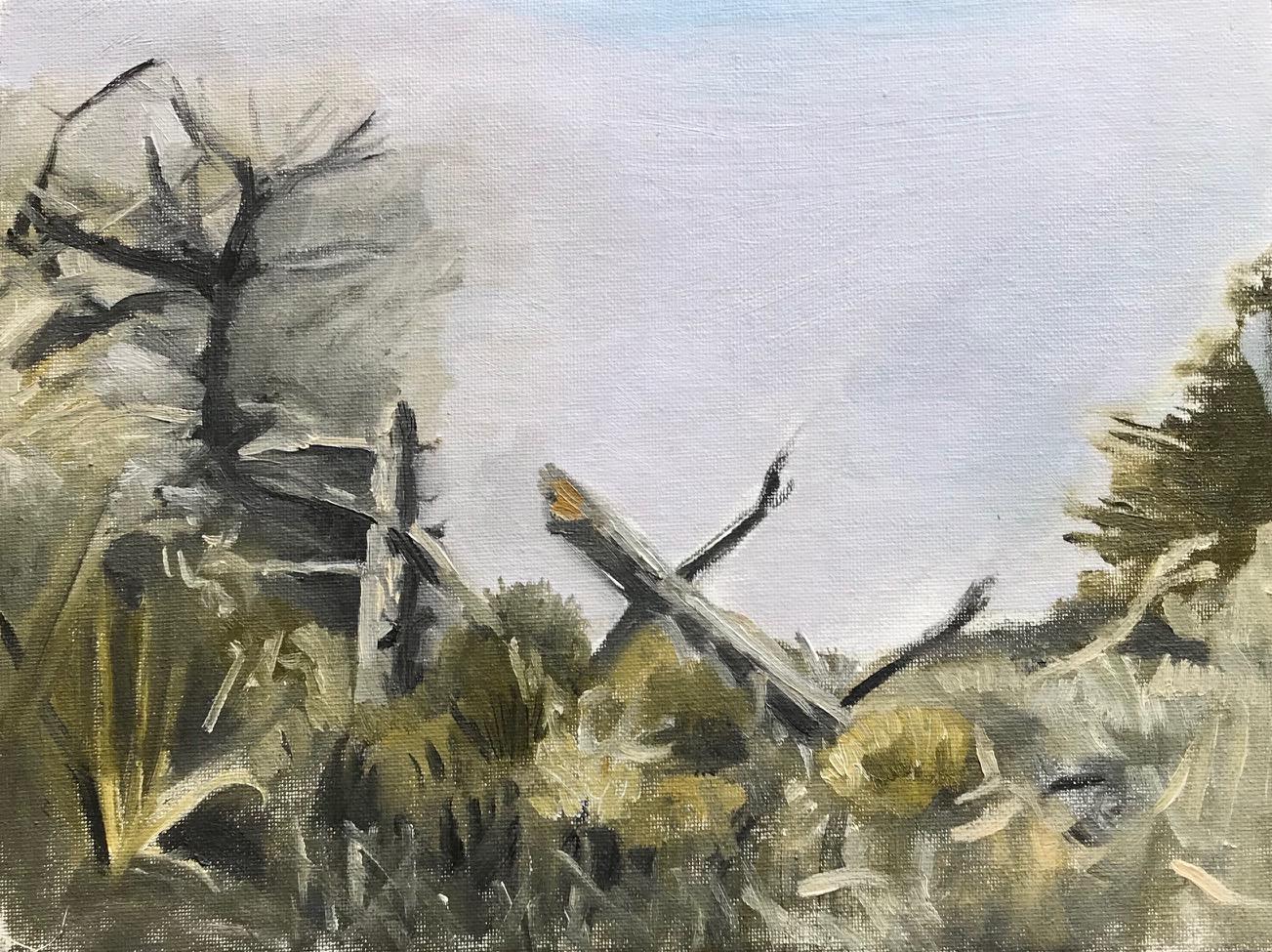 Tree II, Morro Bay
