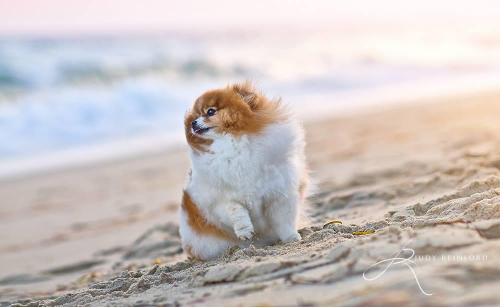Bailey on the beach in Martha's Vineyard