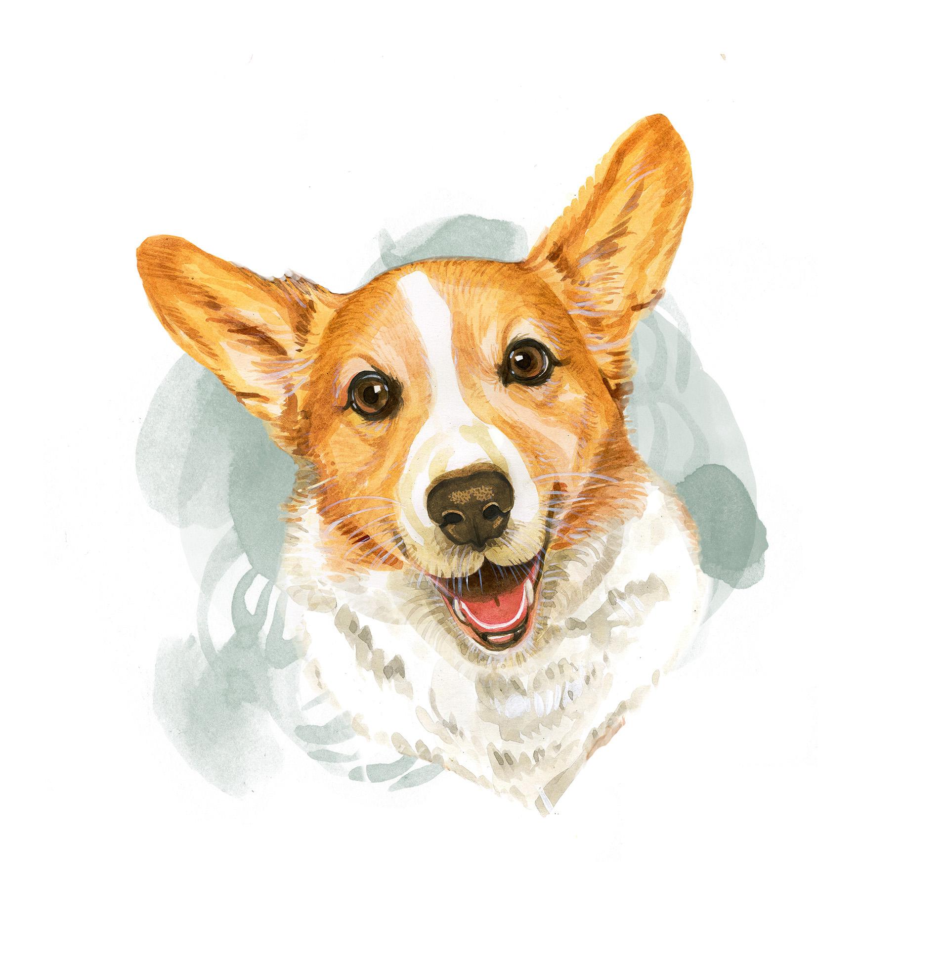 Dog Portrait for Pharmaceutical