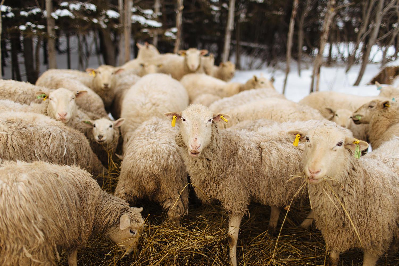cape breton winter engagement shoot
