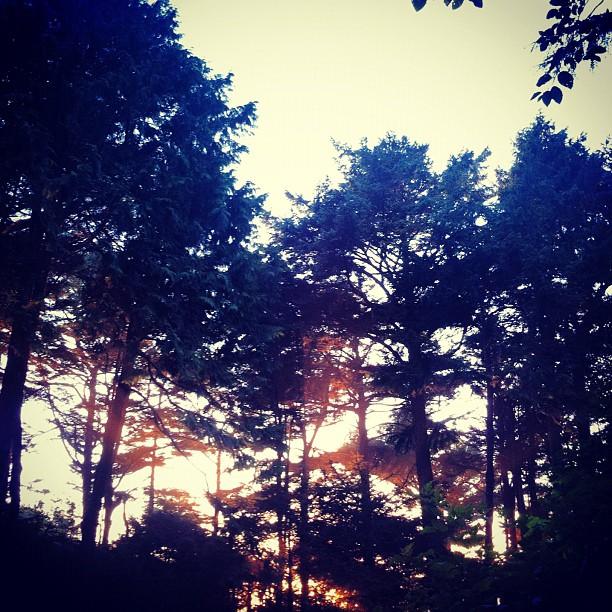 pnw-camping-sun-glow-trees_7917080844_o.jpg