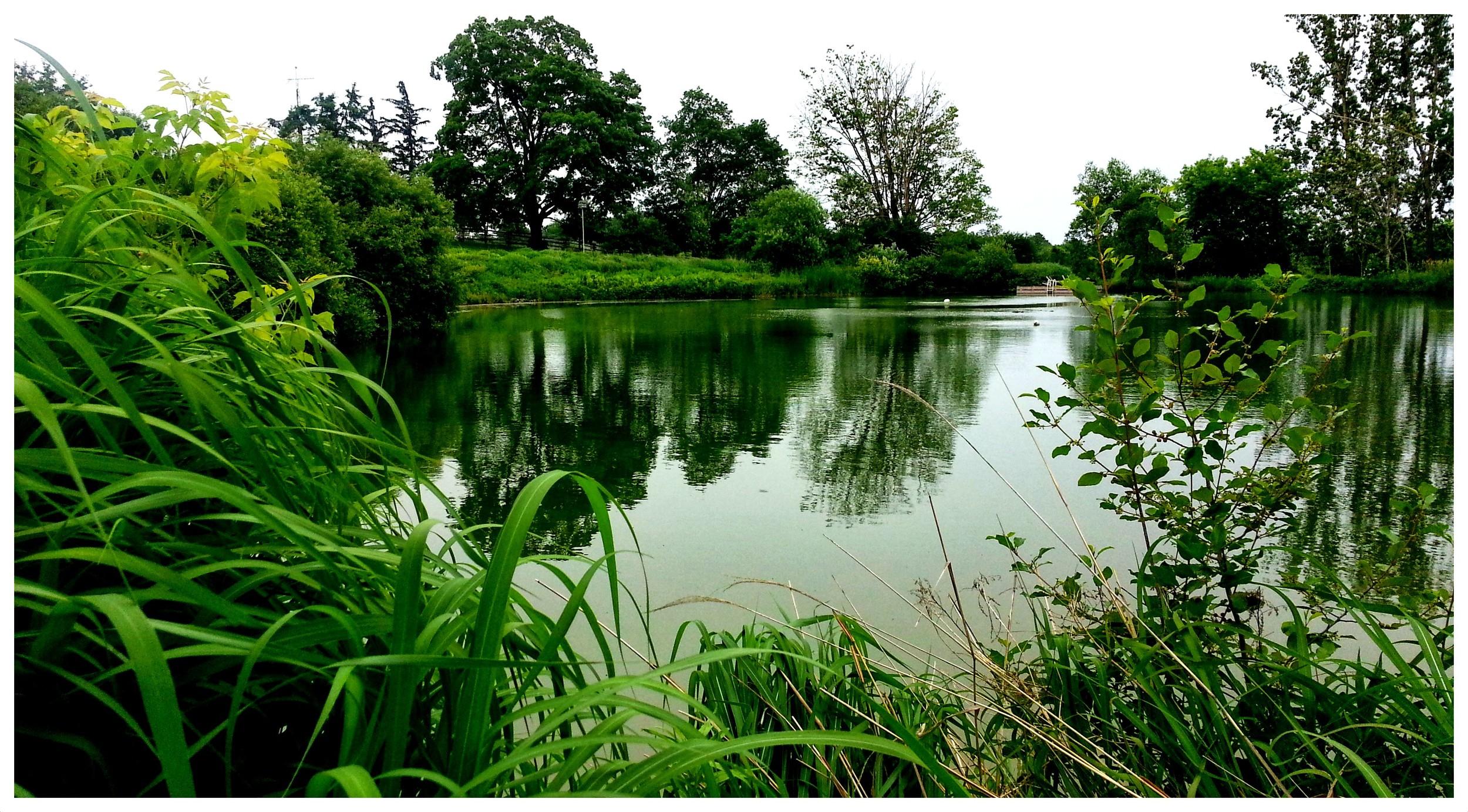 The pond July 2013.jpg