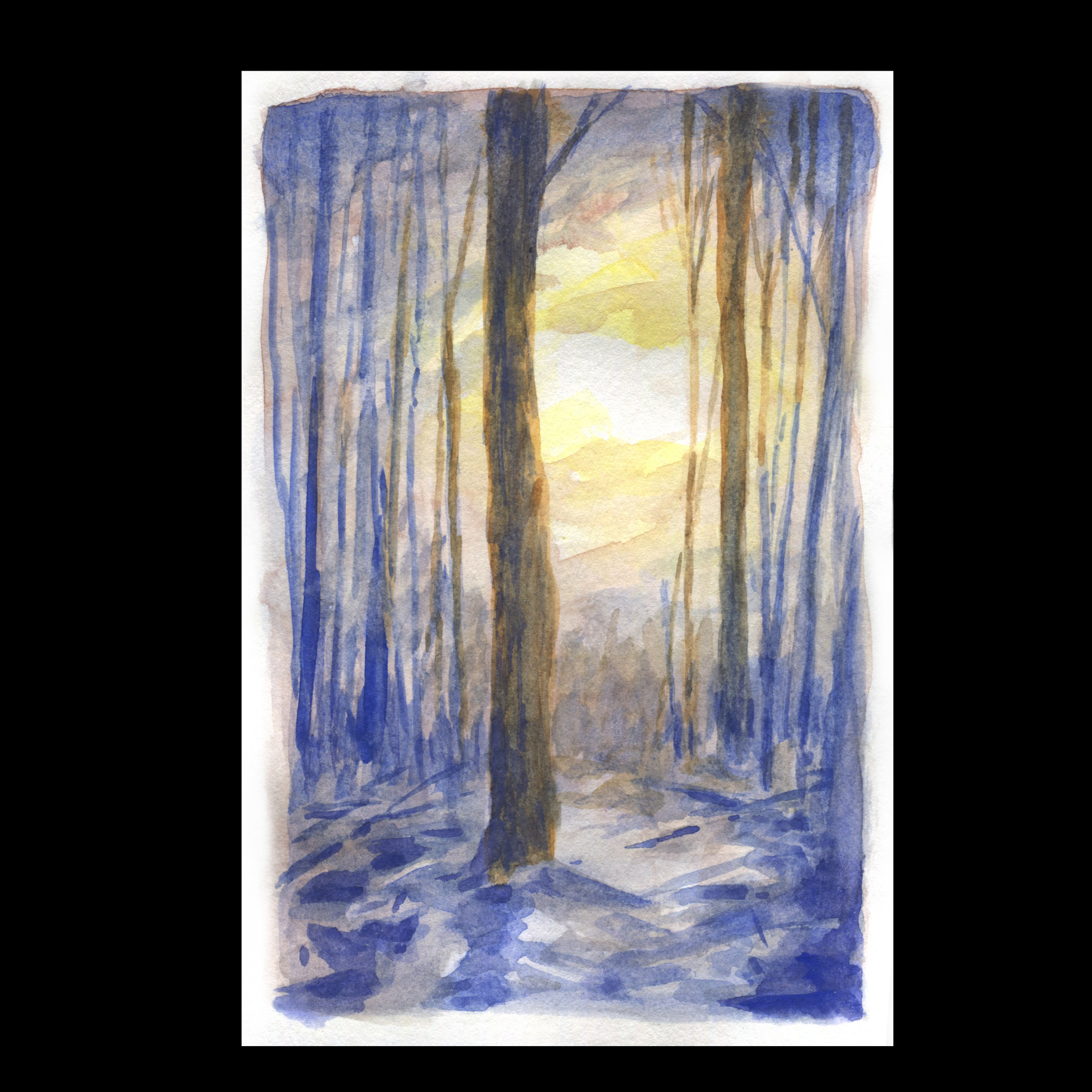 Soleil dans les arbres en hiver.jpg