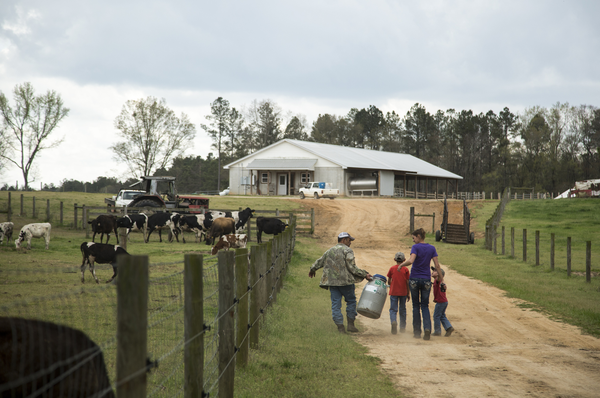 "Jeff, Alex, 9, Jana and Dominic Busciglio, 5, walk up the hill towards the new dairy barn, after all the cows had been moved from Tampa to the property in Gay, Georgia, on March 27, 2017. It took four 18-wheelers to move the 160 cow herd. After arriving on the farm with the cows in tow, Jeff said, ""I told ya it was nice."""