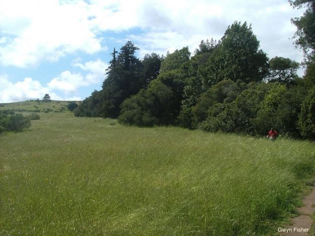 Lookout Trail skirts a meadow in the upper part of Pogonip. Photo credit: Gwyn Fisher - See more at: http://santacruz.hilltromper.com/article/pogonip#sthash.RKpKSGU7.dpuf