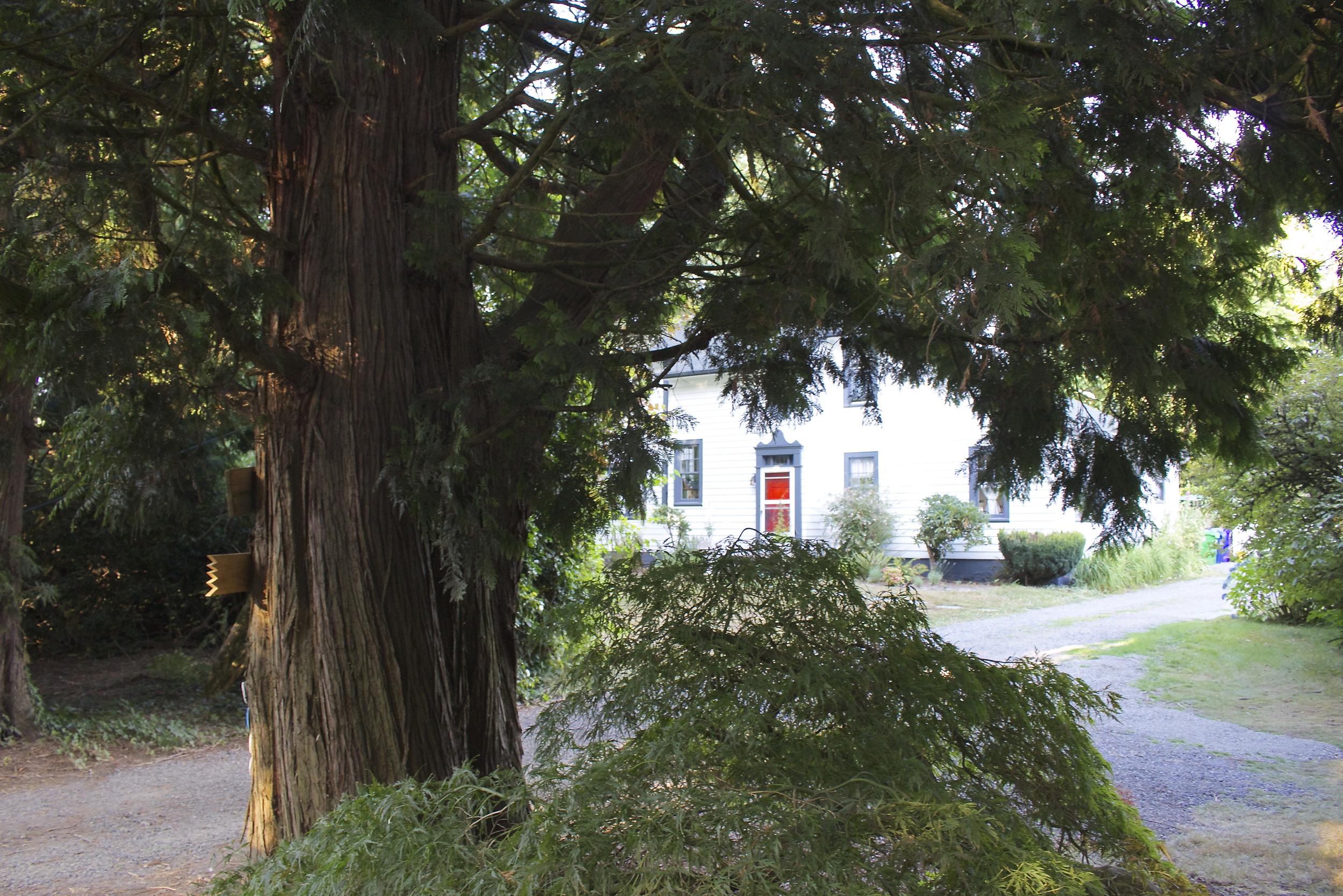 Hogan cedar and a 1920s farmhouse