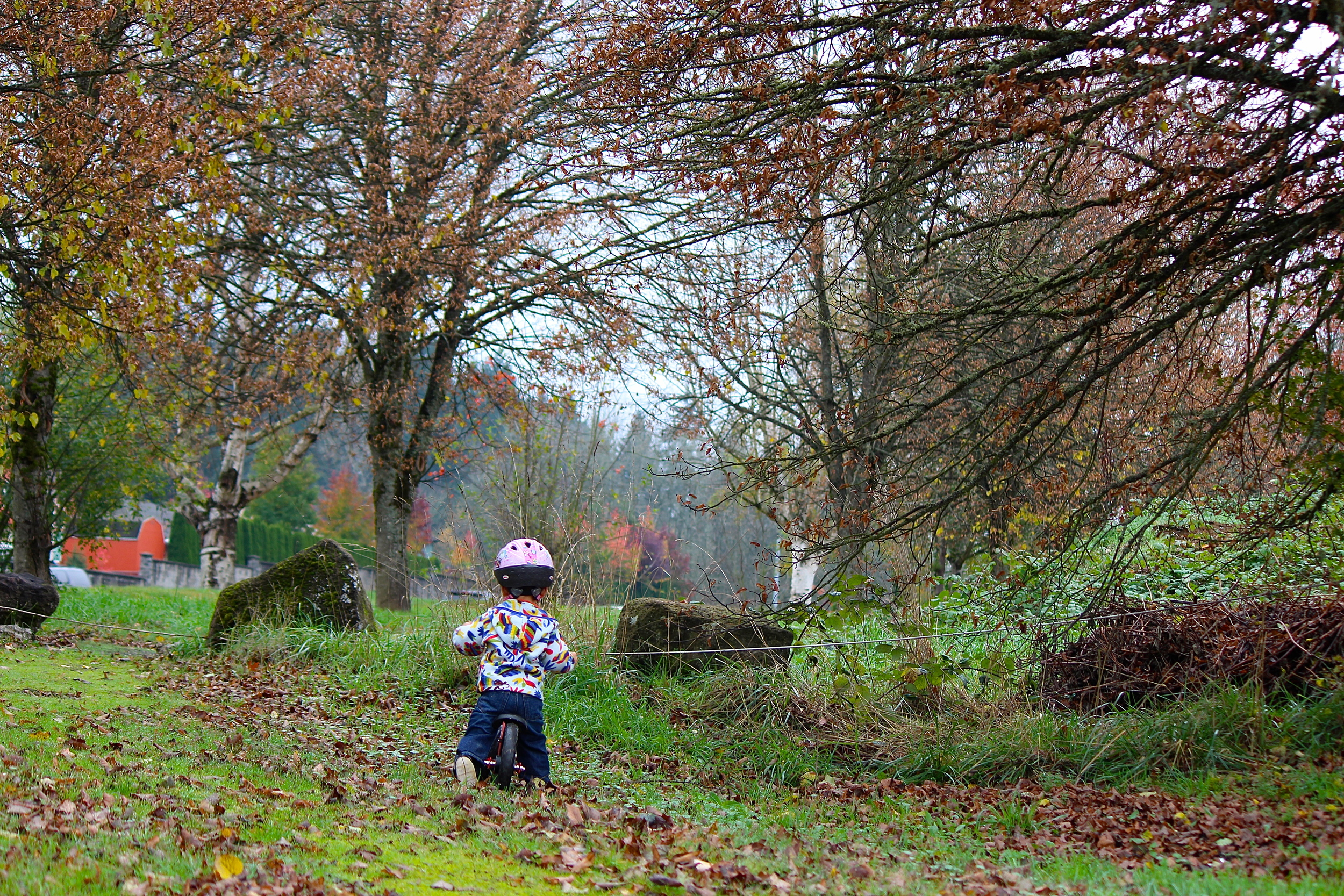 My toddler on his Strider bike  en route  to the park