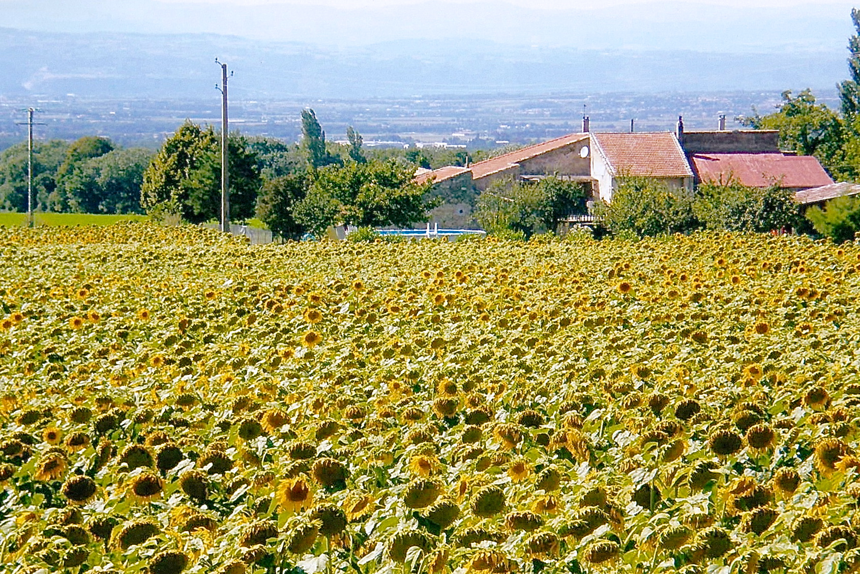 Sunflowers and residence in southern France