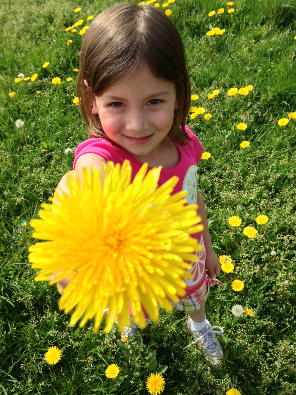 My daughter holding up a dandelion ( pissenlit ) in a field near our home