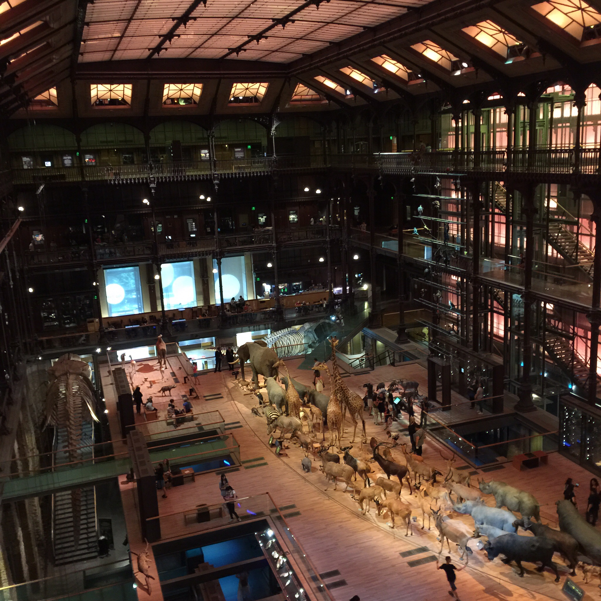 View of the entire hall from the third level, Grand galerie de l'Evolution, Jardin des Plantes, Paris