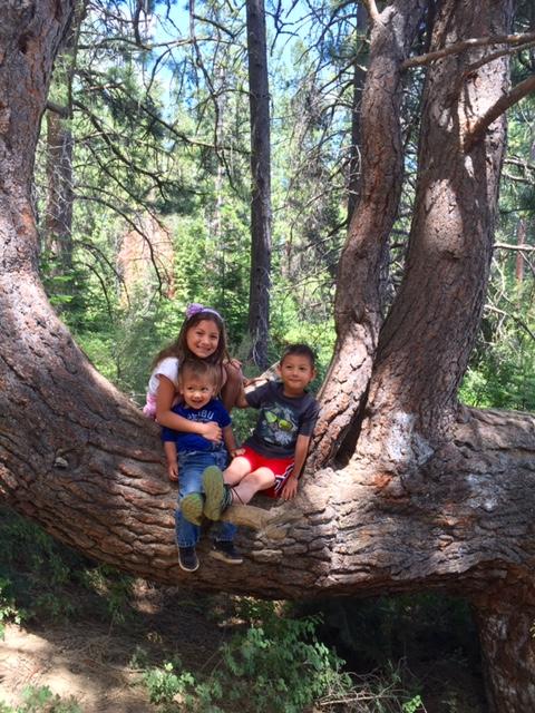 kiddos on tree trunk