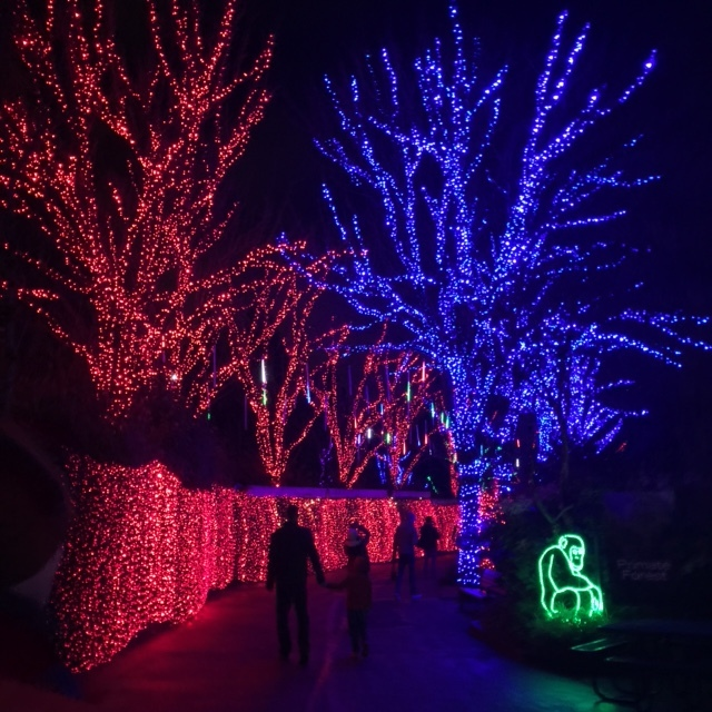 Oregon Zoo lighted trees walking path Christmas Zoolights