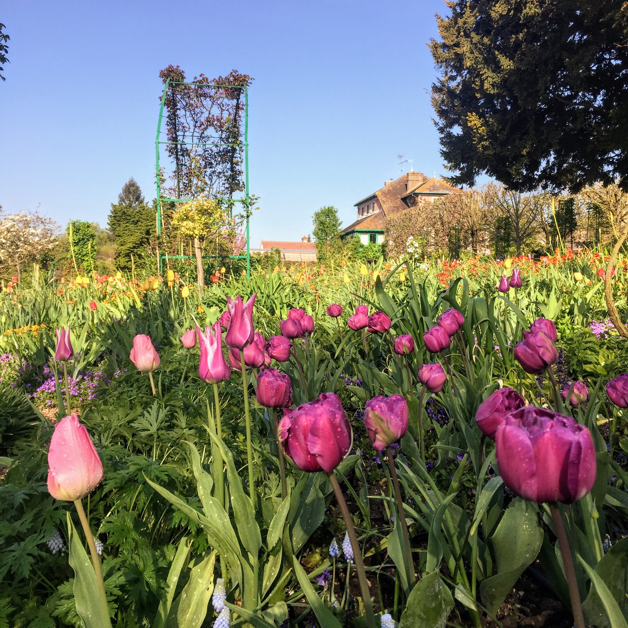 giverny april house tulips blooming