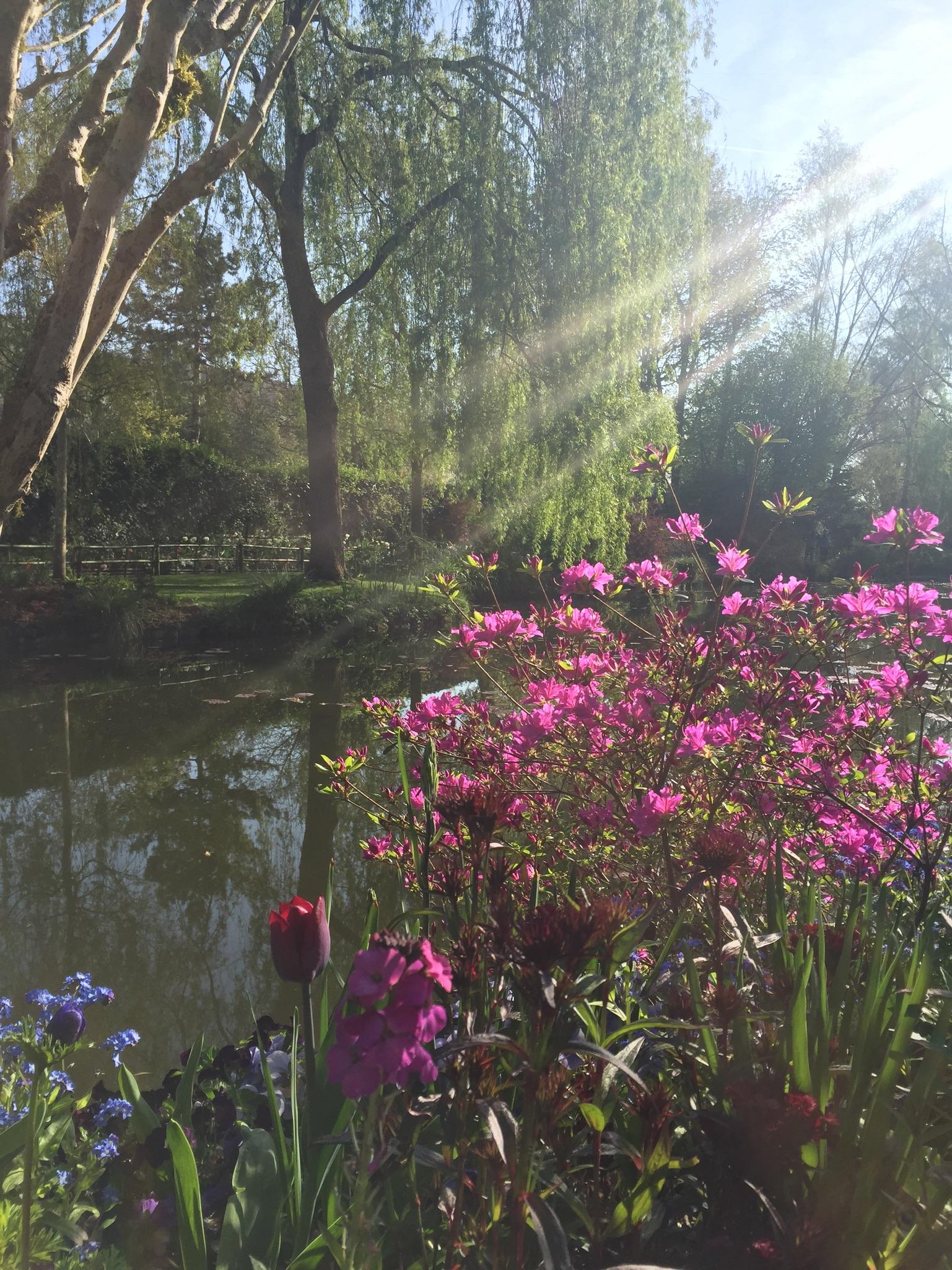 Monet pond willow april sunlight.jpg