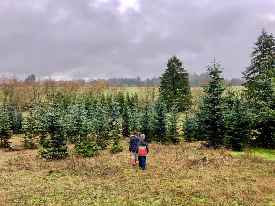 Scouting for our Christmas tree