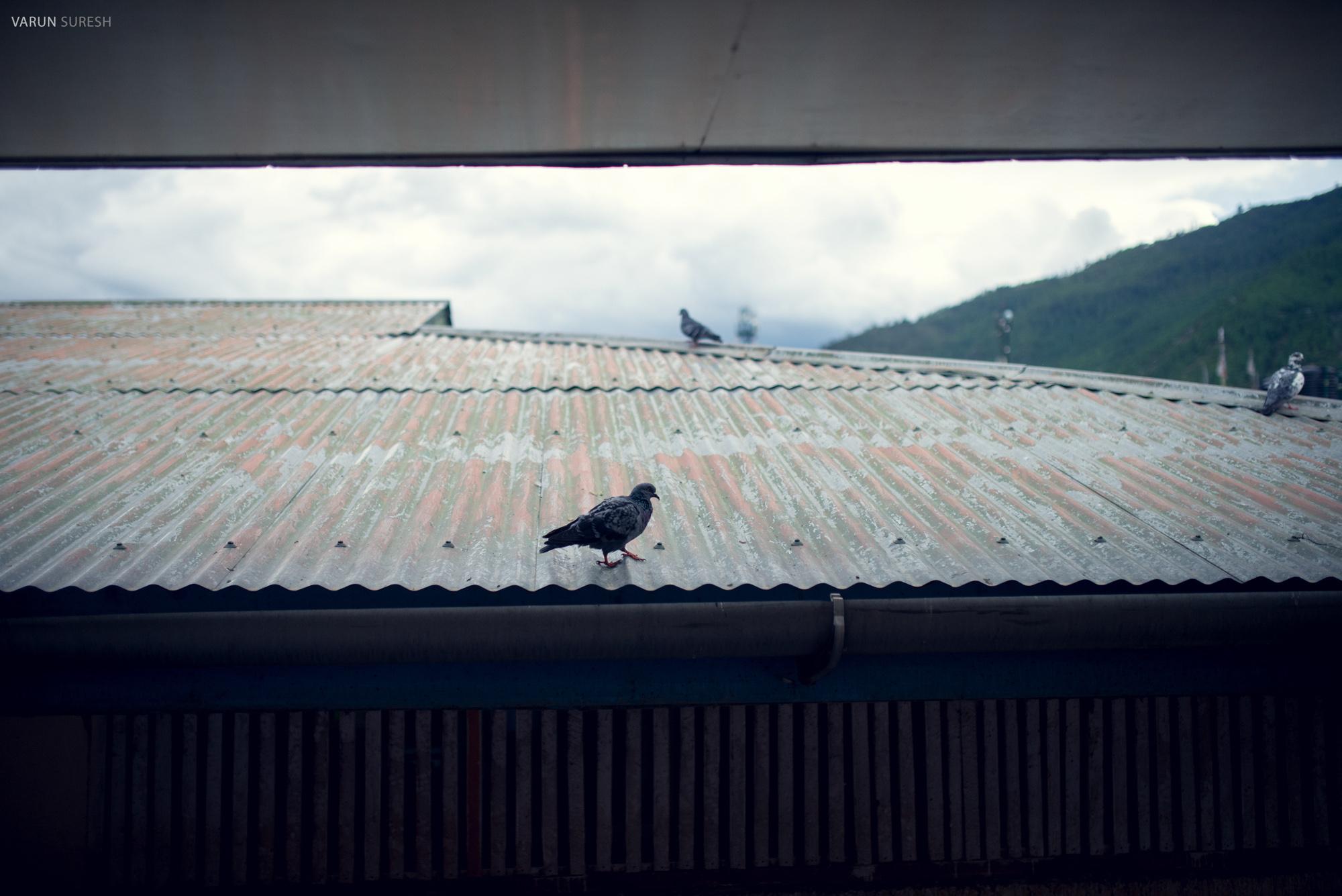 Bhutan_044.jpg