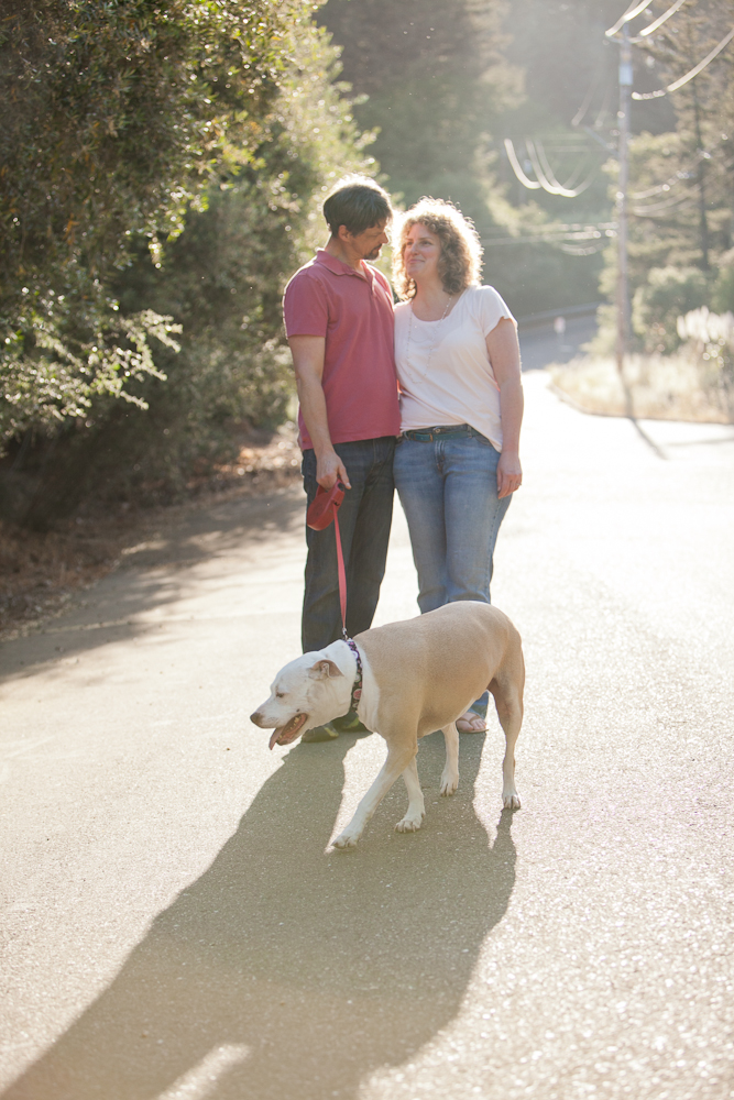 pit bull walking with owners