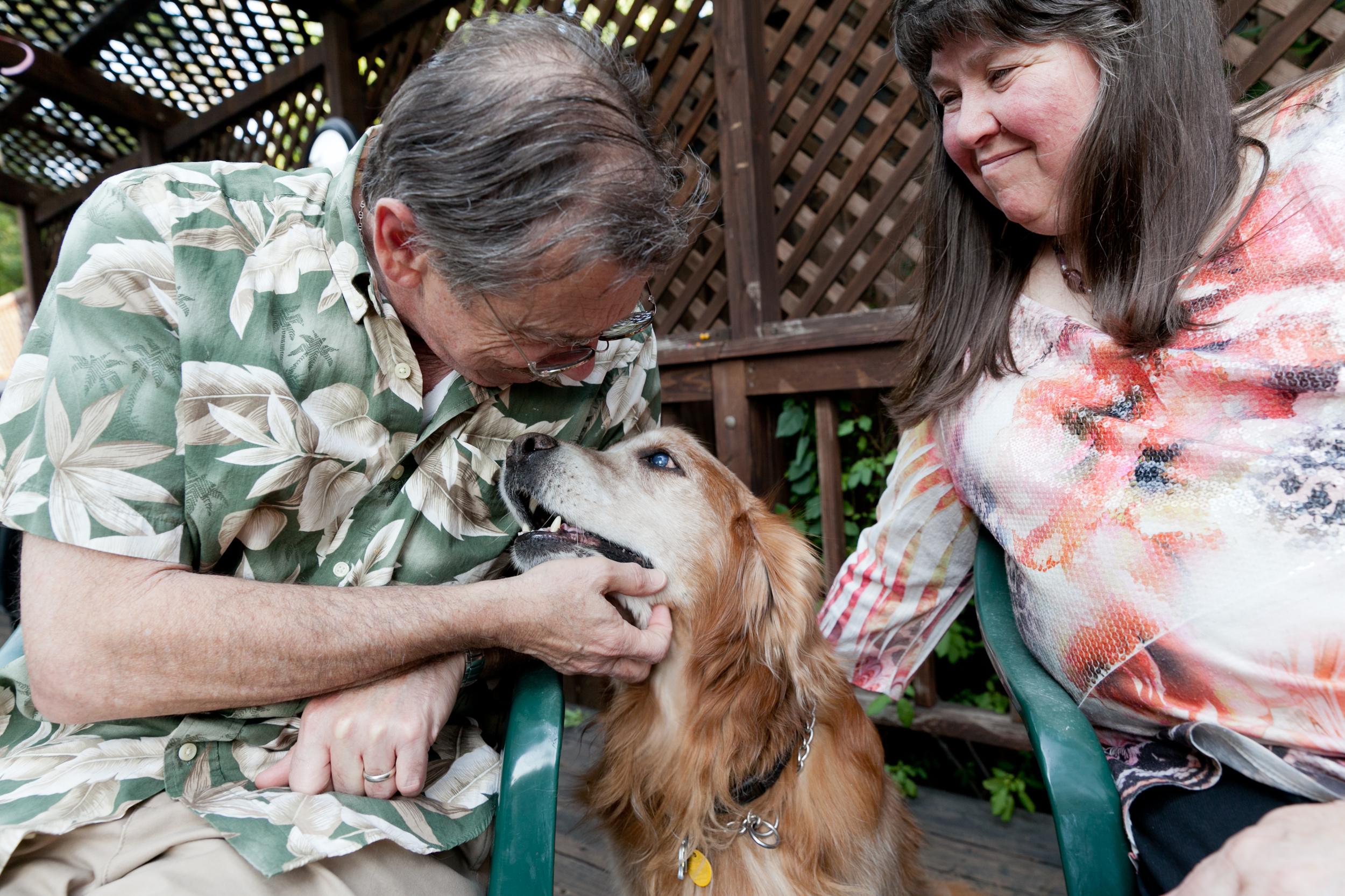 blind golden retriever nuzzling his parents
