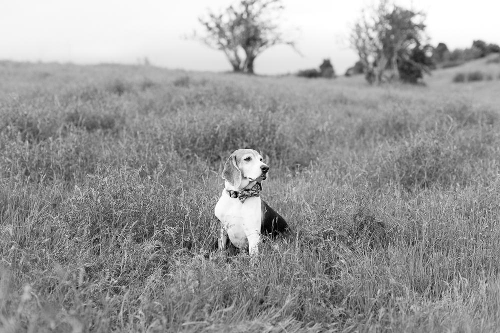 headsburg-pet-photographer-maria-villano-photography