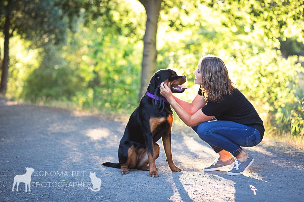 santa rosa dog photos rottweiler sonoma pet photography