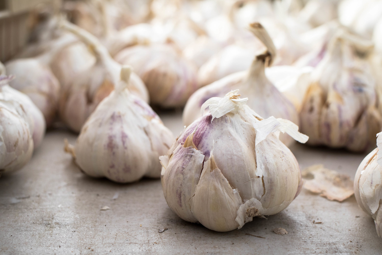 Garlic+Group.jpg