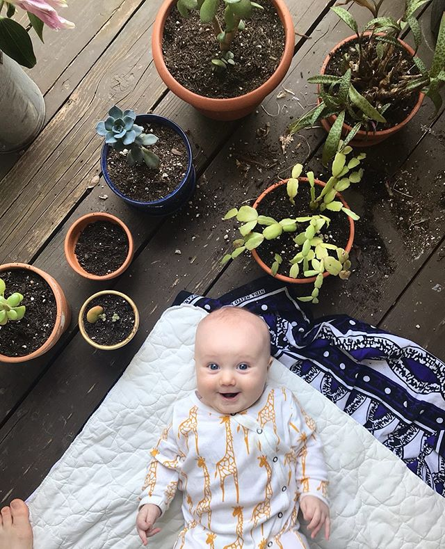 Someone's excited to be doing a little gardening! 🤩😂 Liv has learned the best way to spend a hot afternoon is in the shade with her fingers dancing in the cool soil.  Repotting our succulents and planting some surprise mix of flowers! This happy helper couldn't have been more cheerful!  Anyone have any tips for trying to sprout an avocado pit?! 🥑 🥑 🥑 We're not trying to achieve fruit here, just want the beautiful leaves!! I'm on my third attempt using tooth picks and not having the best of luck! 🤷♀️💫