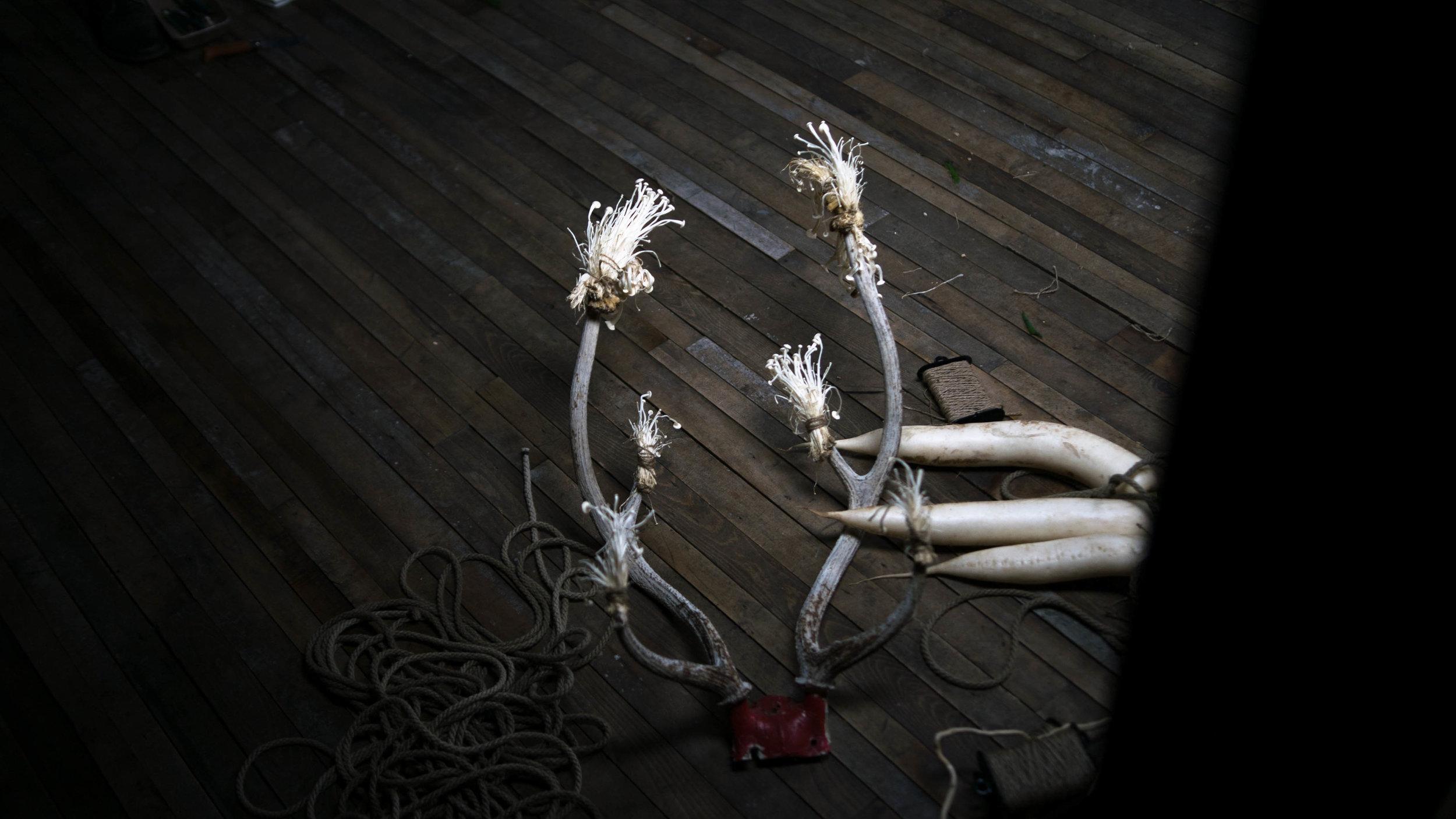 oliver franklin anderson, reindeer, caribou, antlers, rack, red, mushrooms, bondage, tied, decorative, shroom, fungi, fashion film, bdsm, rope, twisted monk, figure drawing, life drawing, prop, nature, natural, design, radish, erotic, appleton, wisconsin, deer, bones