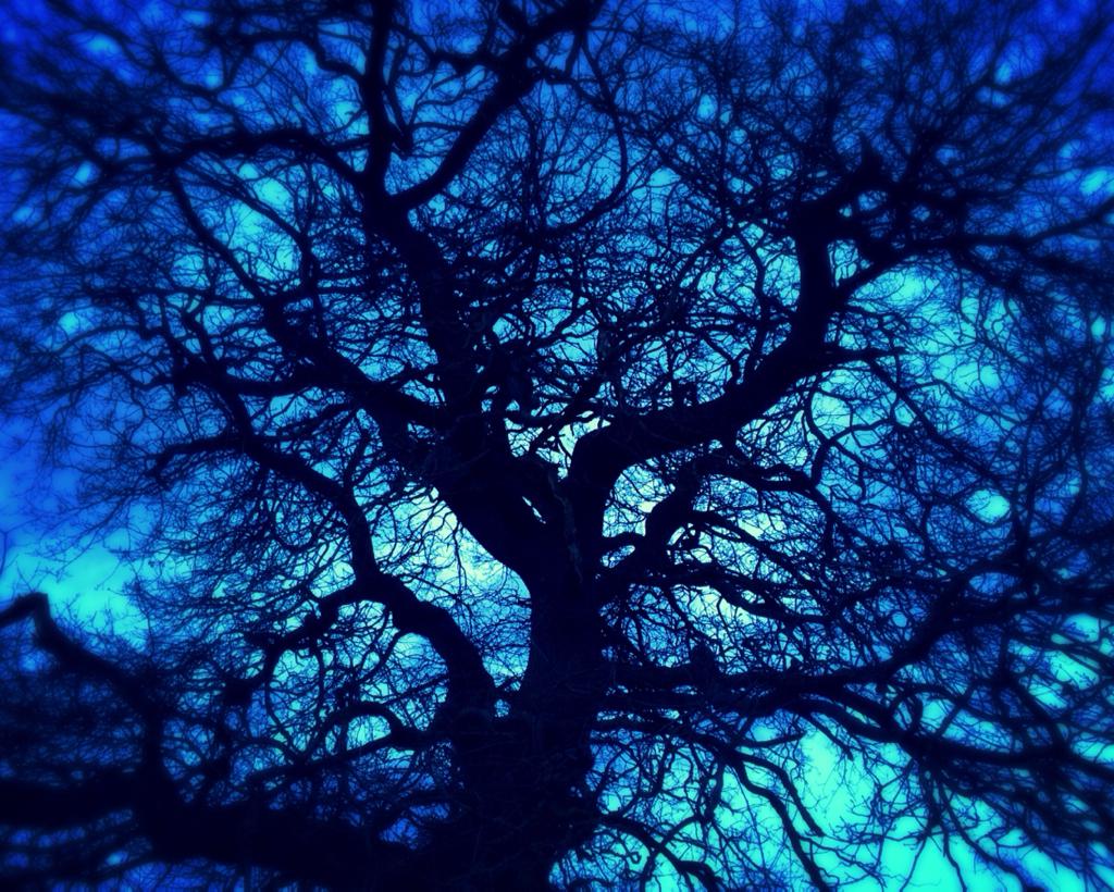 DUSKY BLUE OAK.jpg