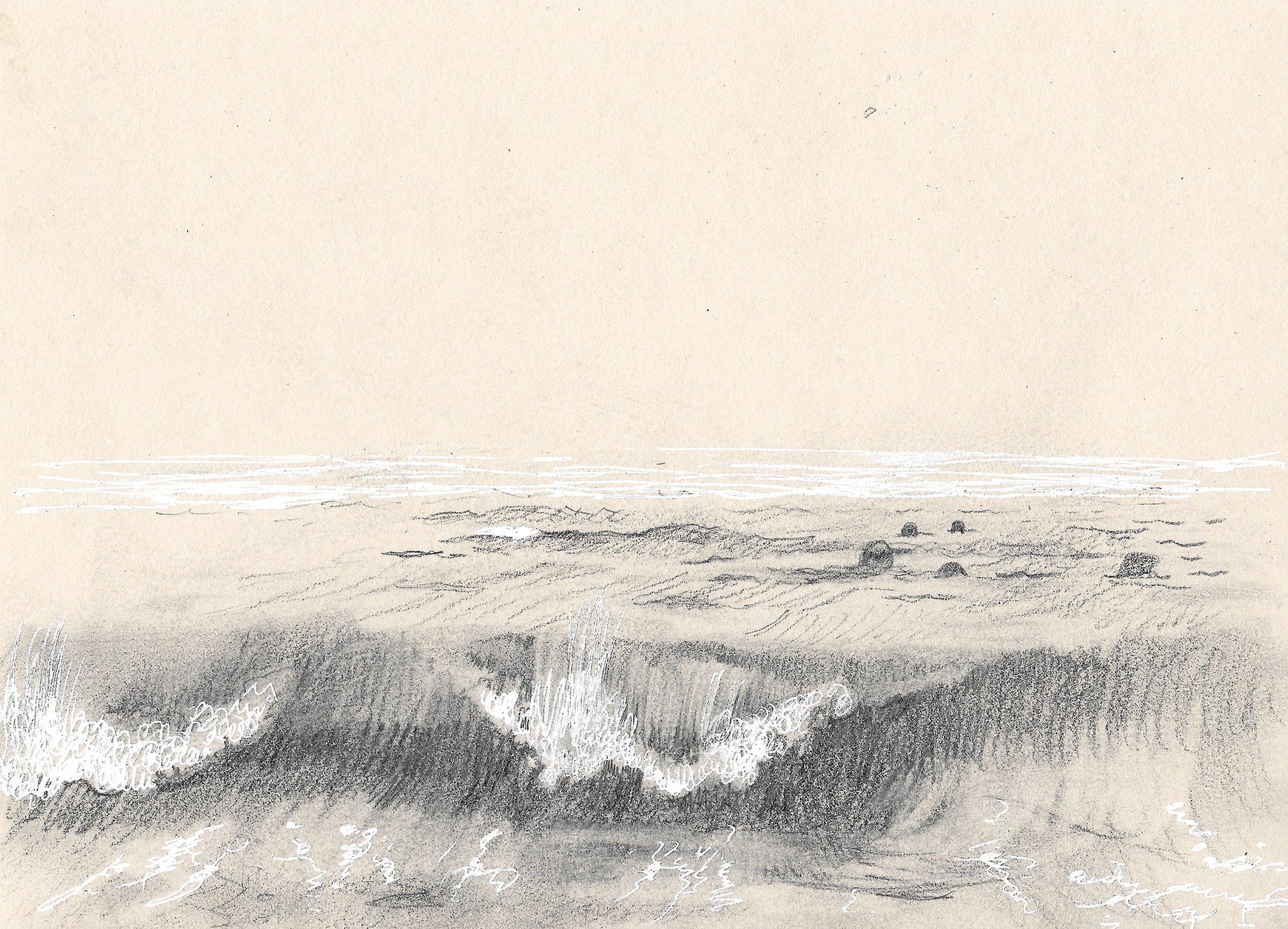 Seals Watching,North Beach