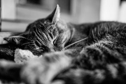 Photo via  Flickr
