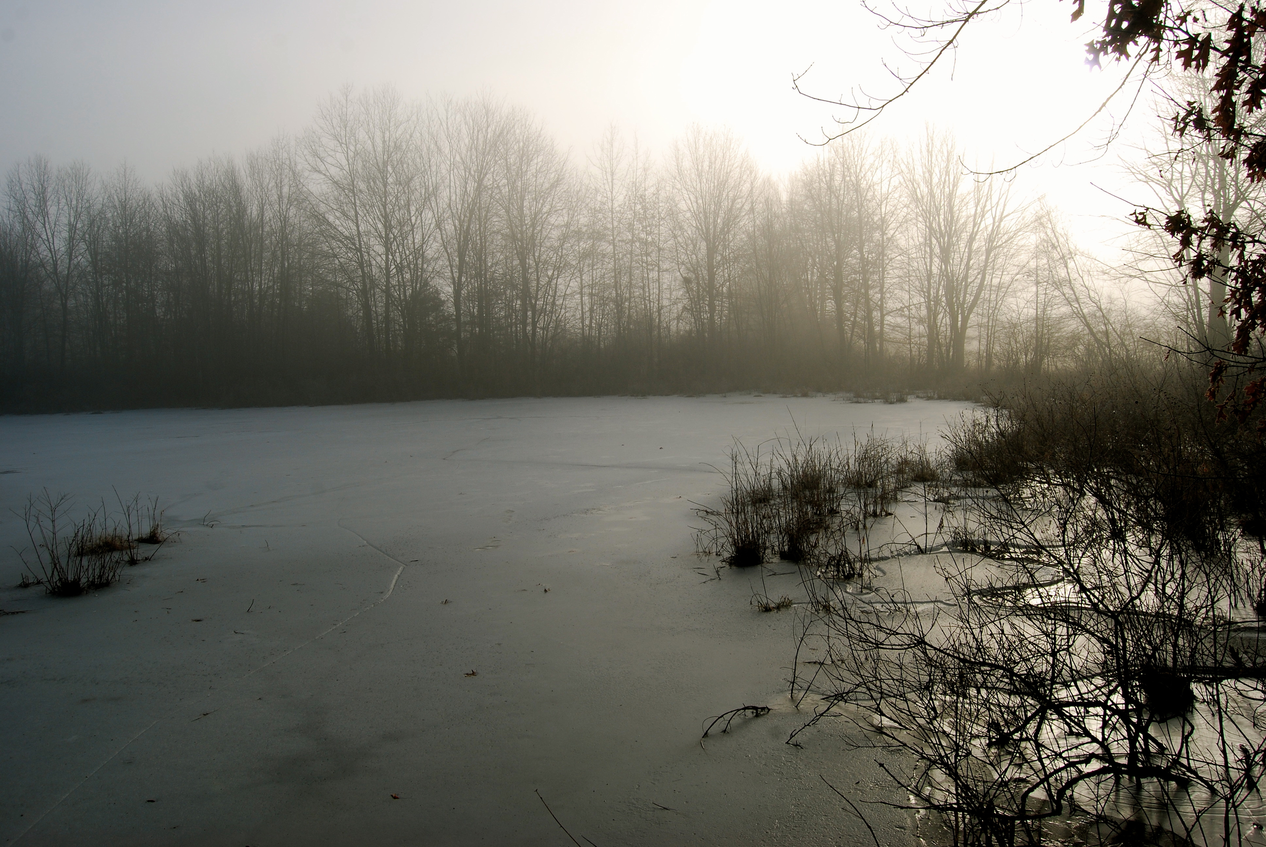 ©Photograph & haiku by Shelita Birchett Benash, 1/15/14  Pointed foot steps dance  cracking the ice on the pond  she dances her death