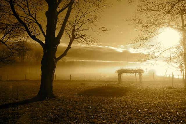"©""Summer Fog"" photograph by Shelita Birchett Benash"