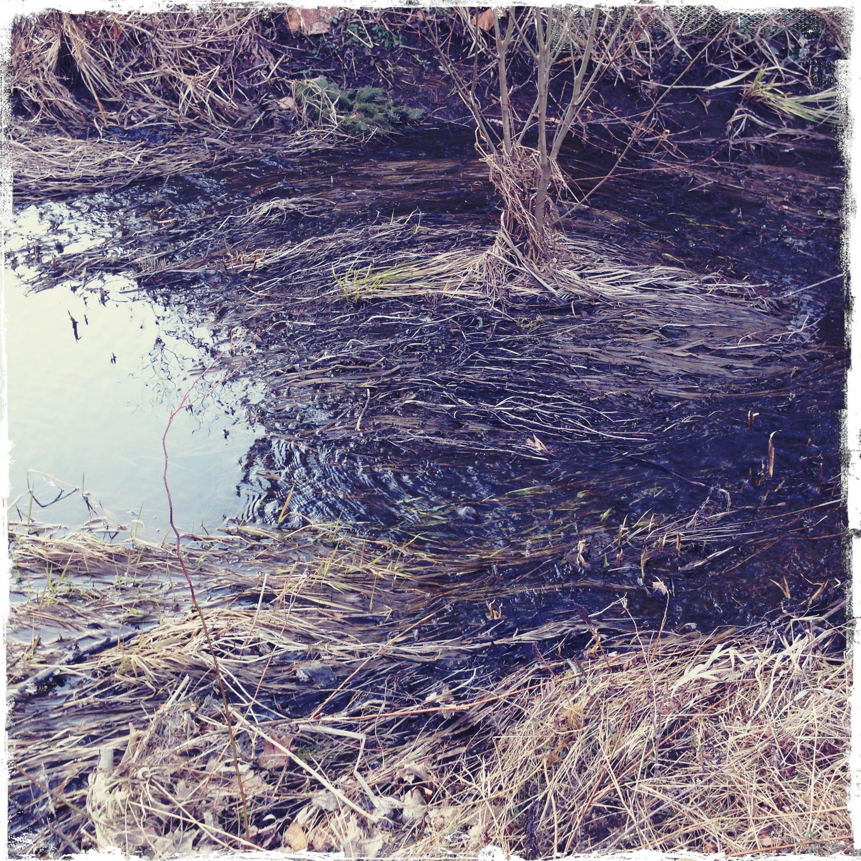 Julie Jacobs_Wetlands_OOB_2015.jpg