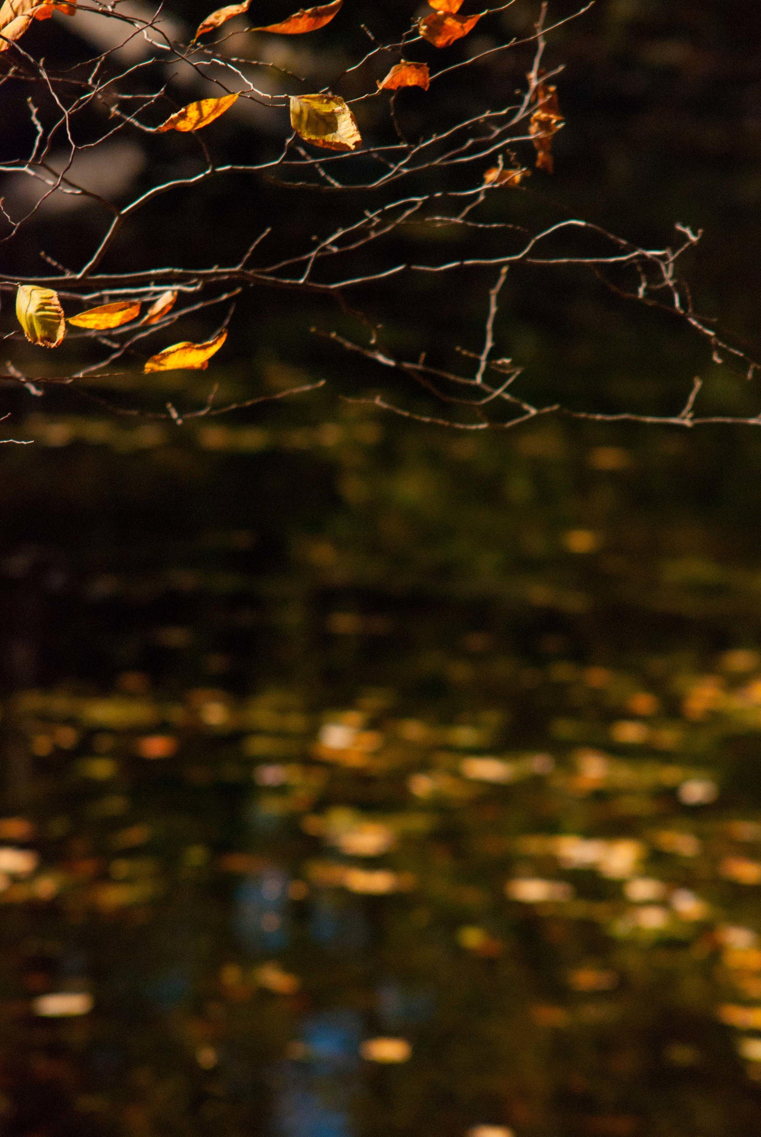 ©Shelita Birchett Benash Vintage Nikon Zoom AI-S 35-135mm f/1.8