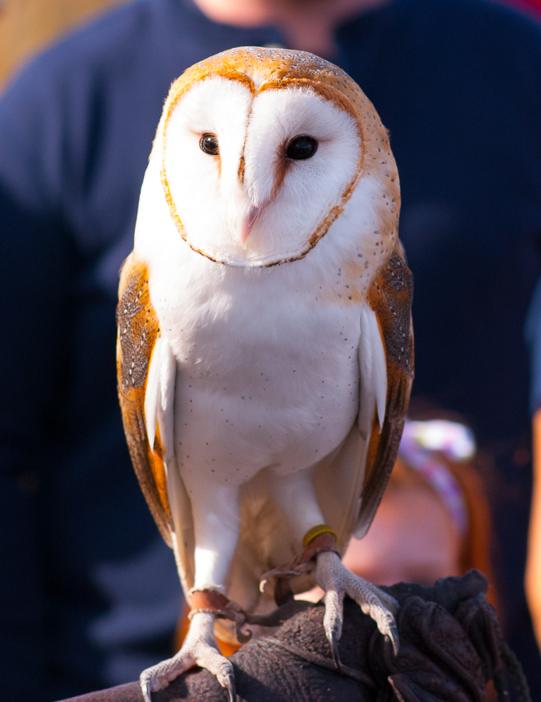 BEAUTIFUL BARRED OWL BY SHELITA BIRCHETT BENASH