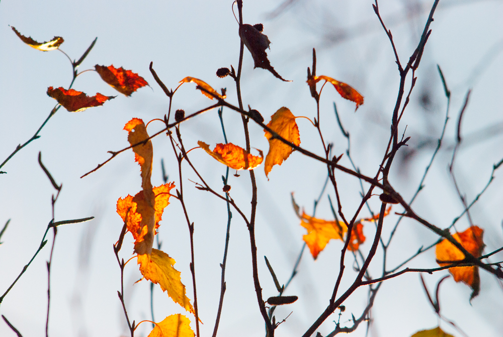 RUNNING NATURE_FALL TREE_YELLOW_SHELITA BIRCHETT BENSH_01.jpg