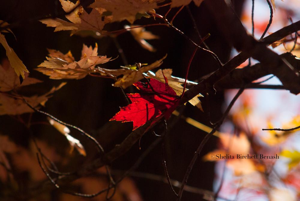 RUNNING NATURE_FIRE_TREE_SHELITA BIRCHETT BENASH_06.jpg