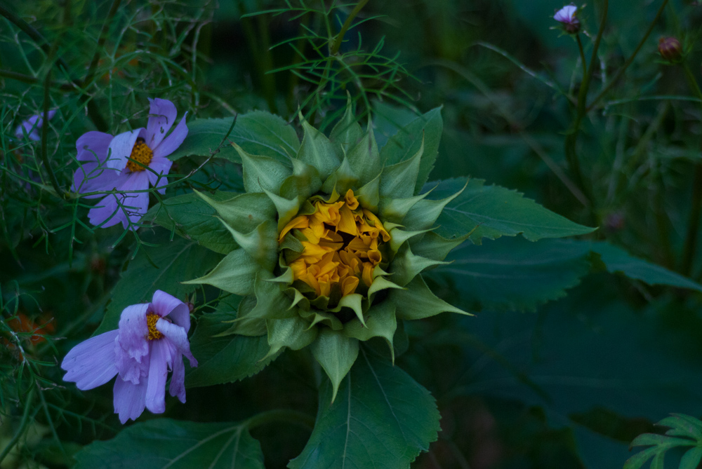 ©Sunflower by Shelita Birchett Benash