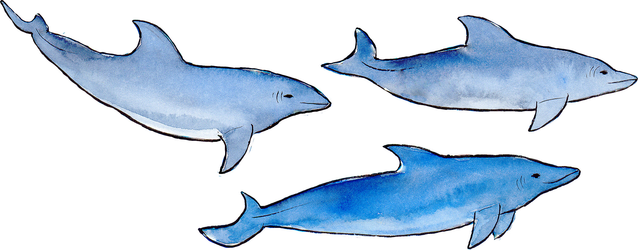 z1 dolphins copy.jpg