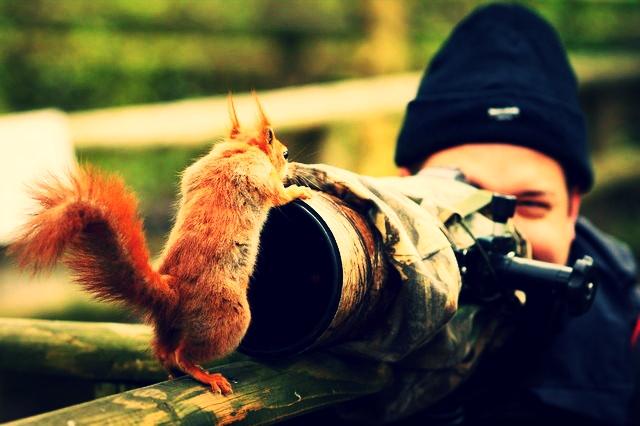 Squirrel Telescope.jpg