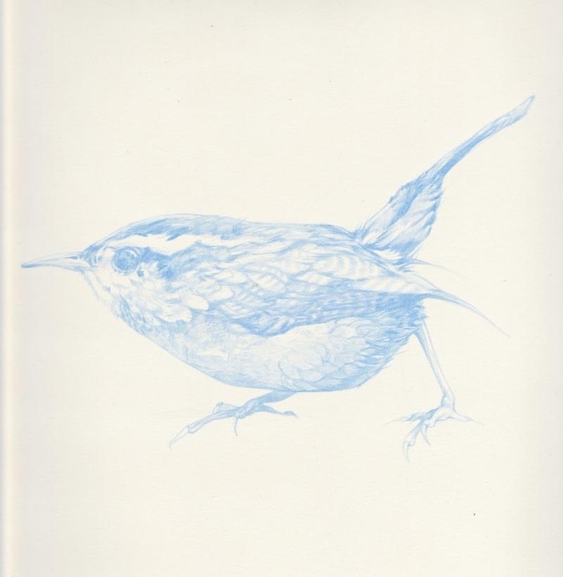 Blue Bird, Francis.jpg